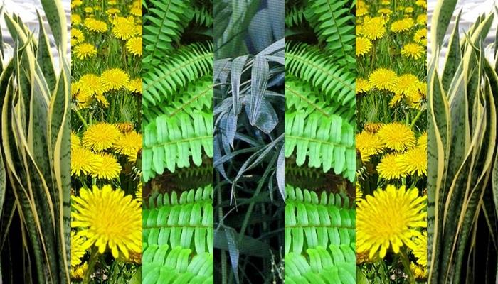 plantas que refrescam e purificam o ar