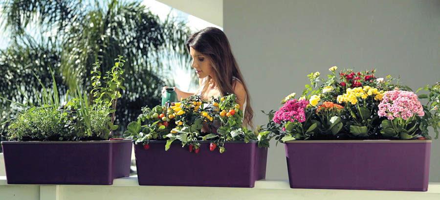horta cultive