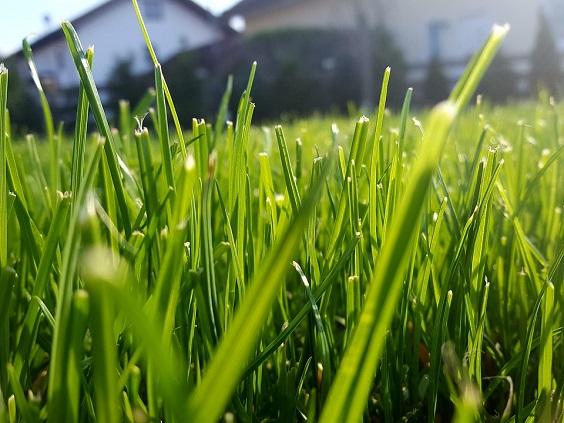 como cortar a grama dicas