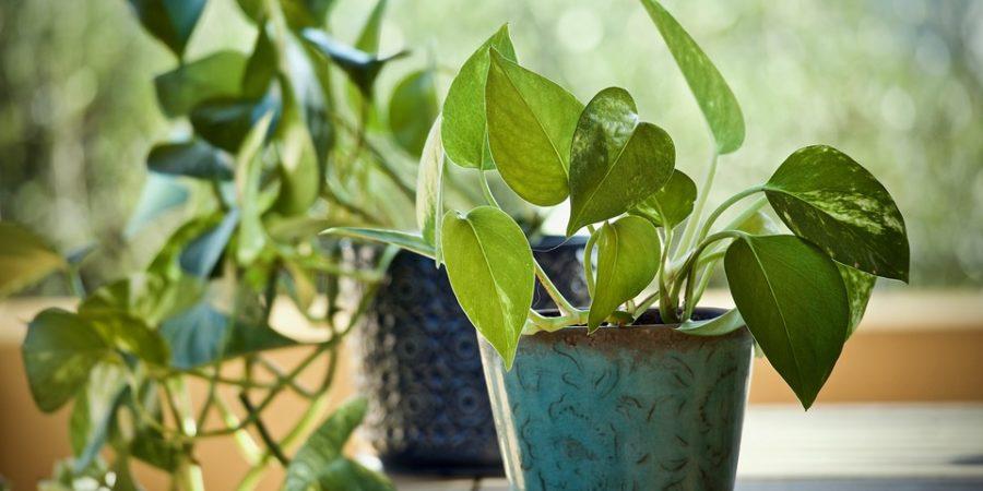 como cuidar das plantas antes de viajar