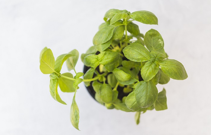 como plantar temperos em vasos